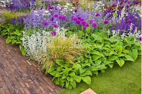 Top Perennials Annuals And Ornamental Grasses For Your Landscape